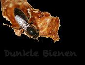Dunkle Bienen